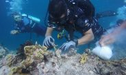 Hari Laut Sedunia, Lanal Biak Tanam Terumbu Karang Dan Bersihkan Pantai