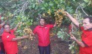 Bupati Herry Naap, Hadiri Penanaman Pohon Yang Digelar DPC PDIP Biak Numfor
